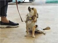 犬のしつけ方教室 9/14 - SUPER DOGS blog