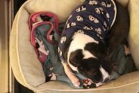 毛布犬はじめましたジョジョ - 雑貨屋regaブログ