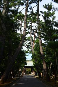井伊直弼の菩提寺・豪徳寺へ参詣 - kenのデジカメライフ