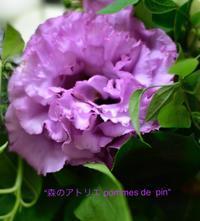 「トルコキキョウ」 - 世田谷区羽根木 東松原の小さなお花の教室   「森のアトリエ  pommes de pin」