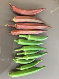 香港の有機野菜 - ヨーキー はちのお留守番とママの香港生活