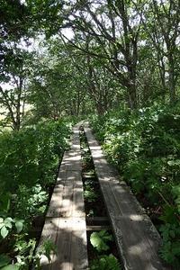 八島湿原&鷲ヶ峰 - 菜彩茶房