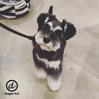 Hello Hana !! - Doggie Do!! / good dog and hello cat !!