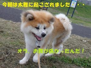太雅の不調・・・(^^;) - もももの部屋(家族を待っている保護犬たちと我家の愛犬のブログです)
