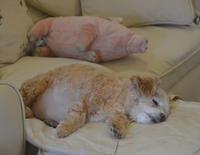 子豚 と cotton と 猫ちゃん - my story***