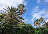 椰子の木がある風景 - surftrippper サーフィンという名の旅