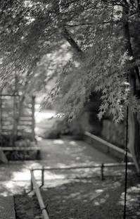 かまくら散歩 - 心のカメラ / more tomorrow than today ...