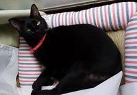 長袖着用 - 黒猫瓦版
