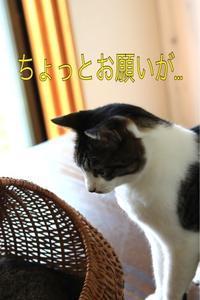にゃんこ劇場「カゴ争奪戦」 - ゆきなそう  猫とガーデニングの日記