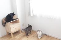 今月の5猫集合写真に久しぶりのおもちゃ - きょうだい猫と仲良し暮らし