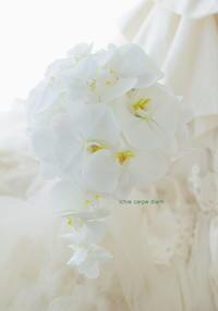 セミキャスケードブーケ 帝国ホテル様へ 胡蝶蘭だけという贅沢 - 一会 ウエディングの花