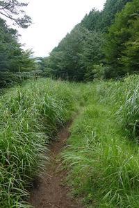 秋を感じに箱根明神ヶ岳へ その4 - 季節(いま)を求めて