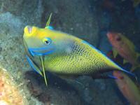 自津留先端 2017.7.24 - Travel&Diving