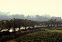 朝霧の中 - 癒しの空間