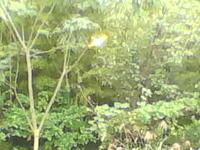 金髪のスカートをはいた女の子の妖精のビデオを見てください。 - 森の精観察日記