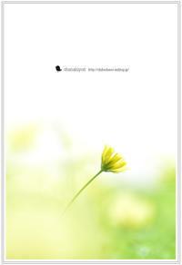 記憶 - お花びより