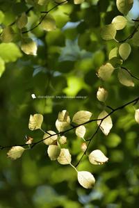 秋へ ようこそ - お花びより