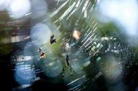 輝く蜘蛛の糸 - tokoのblog