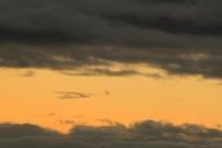 火の鳥(夕暮れ)。 - 青い海と空を追いかけて。