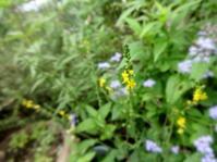 金水引 - だんご虫の庭