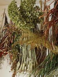 ワークショップのお知らせ - 暮らしと植物のブログ