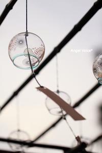 台風 - Angel Voice*
