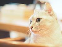 嵐の前の猫 - azukki的.