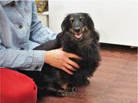 ドッグマッサージ 9/17 - SUPER DOGS blog