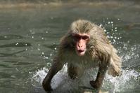 サル走る! - 幡ヶ谷写真部 ~幡ヶ谷司法書士事務所の写真ブログ~