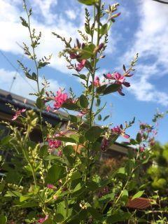 植物は一足早く秋 - 堀江美都子公式ブログ『Micchi's Hoihoi Days』