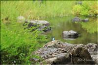 雨の公園にて ☆カワセミ編☆ - 今日のいちまい