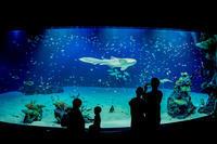 マリホ水族館 - Omoブログ