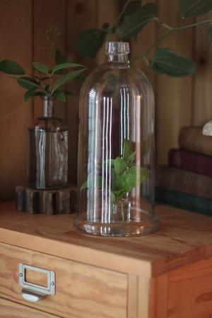 ガラスドームと木の器 - Happy Days