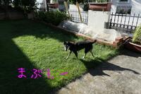 台風の後は2週間ぶりの・・・ - HAMAsumi-Life
