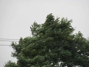 台風から温帯低気圧へ - 羽幌遊歩のおまけ