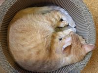 猫的マイブーム - もるとゆらじお