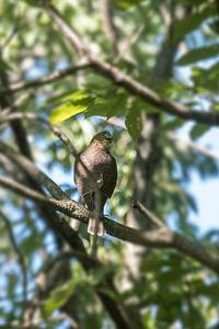 またもや‥証拠写真 - 趣味の野鳥撮影