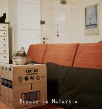 ここはどこ? - Breeze in Malaysia