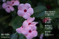 花いちりん - 花の咲み、花のうた、きらめく地上 ―― photo&poem gallery kannon花音