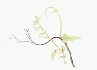 電子植物画 - 糸巻きパレットガーデン