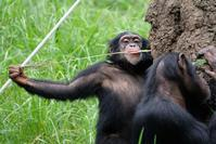 レンズレンタル3 - 動物園に嵌り中