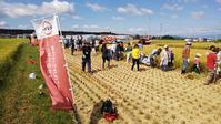 スシローのお米-レーク65収穫体験 - 滋賀県議会議員 近江の人 木沢まさと  のブログ