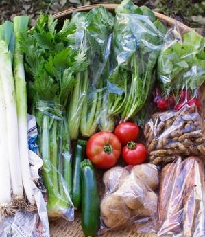 今週の野菜セット(9/19~9/23着) - キシノウエンの 今日のてしごと