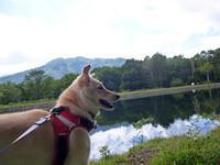 清水ヶ池と宇棚の湧き水 - Kokiary@ のどかへつなぐ happy days