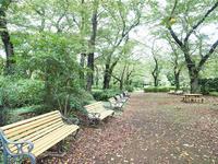 初秋の公園 - yohira's photo diary