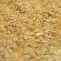 【青】今年の自作お米がおいしいワケ。 - いつかきっと
