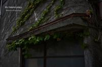 蔦のある家 - Mark.M.Watanabeの熊本撮影紀行