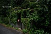 蔦屋 - Mark.M.Watanabeの熊本撮影紀行