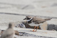今日の鳥見(2017年9月19日) - ほとんど野鳥写真日記