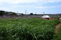 「農園と野菜動線のある糸島の家」の地鎮祭でした☆ - プロトハウス通信